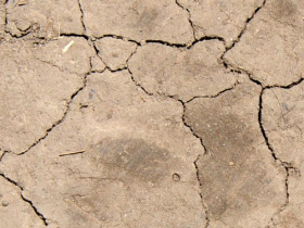 Cracked Dry Earth Texture